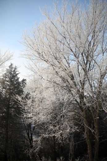 frosted_0009