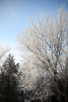 frosted_0010