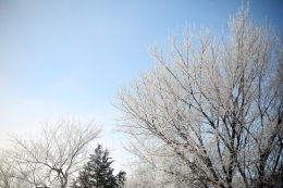 frosted_0012