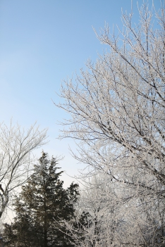 frosted_0016