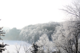 frosted_0018
