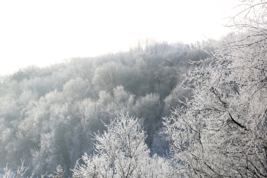 frosted_0019